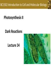 Lecture+34+-+Photosynthesis+II+-+Dark+Reactions