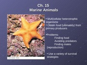 Lecture10MarineAnimalsI