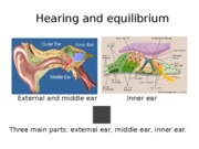 Week 10 Ch. 16 Auditory Powerpoint Lecture