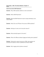 14 - study guide- DNA Replication