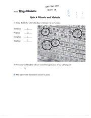 Mitosis and Meiosis Quiz