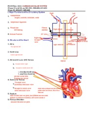 Physiology CARDIOVASCULAR SYSTEM Lecture 1