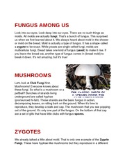 FUNGUS AMONG US