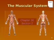 The Muscle System human.ppt