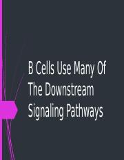B Cells Use Many Of The Downstream Signaling