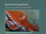 Lecture 23 - Topics - Animal Cognition