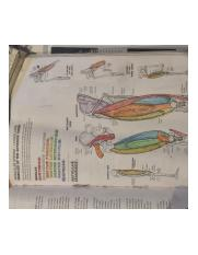 Helpful Anatomy Coloring Book Diagram 1
