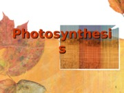 Cell-Lec4-Photosynthesis-forBB