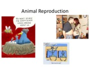 Animal Reproduction- no animation.pdf