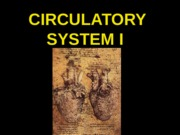 ANP 300 - Lecture - Circulatory System