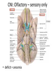 Lec 22 cranial nerves_gross.pdf