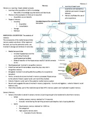 Memory class notes - Psych/Neuro 3515