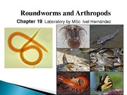 13._Roundworms_and_Arthropods