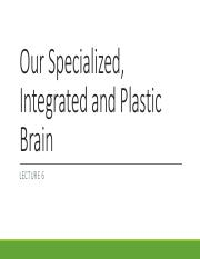 Lecture 6 Our Specialized, Integrated and Plastic Brain
