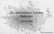 05-DNA replication