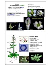 Biol 474 Chp 7_Flower dev