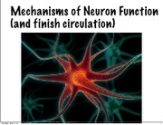 Lecture 29 Mechanisms of Neuron Function