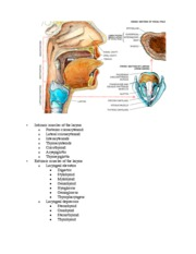 cartilages,location,function larynx 00-13-49