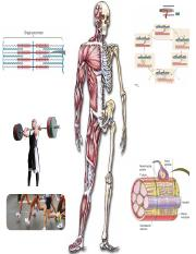 MusculoskeletalSystems