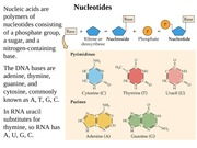 Chapter 4 Nucleic acids and Origins