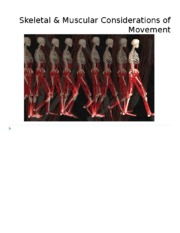 3. Skeletal &  Muscular Considerations of Movement