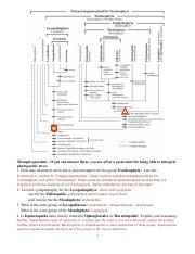 Phylogenetic Tree Answers.pdf