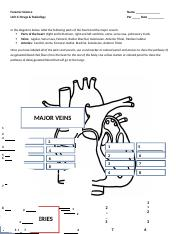 1 - vessels and heart diagram new.docx