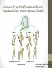 Class 15 early hominins.pdf