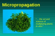 Micropropagation 2009