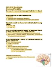 Endocrine Study Guide.pdf