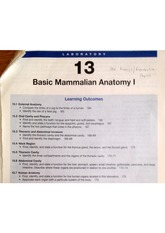 Basic Mammalian Anatomy