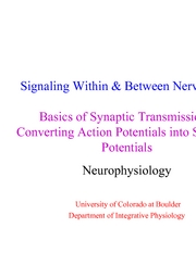 5 Neural Signals 3 - Basics of synaptic transmission - converting action potentials into synaptic