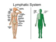 Lecture 25 Lymphatic System diagrams.pdf