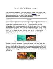 Classes of Vertebrates.docx