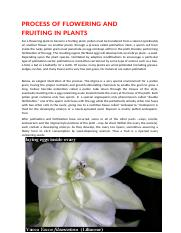 PROCESS OF FLOWERING AND                 FRUITING IN PLANTS.docx