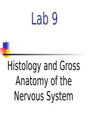 Lab 9 - Nervous System.ppt