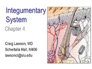 Chapter 4 Integumentary System Lawson 2012