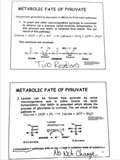 Metabolic Fate of Pyruvate