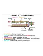 DNA Replication Fill-In (complete).png