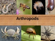 Chapter 13 Arthropods Part 1