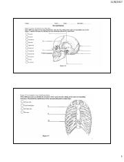 Axial skeleton coloring.pdf
