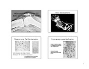 Musculoskeletal System III - LECTURE SLIDES