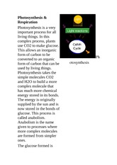 SPH 4U Class Notes Photosynthesis