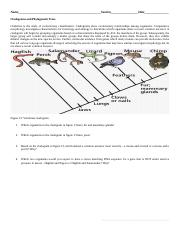 Museum and cladograms Bio2-3.docx