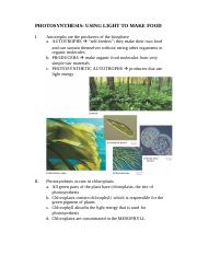 PHOTOSYNTHESIS.doc