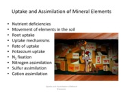 Lec12UptakeandAssimilationOfNutrients