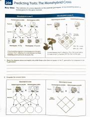 Mendel_Worksheet_Review