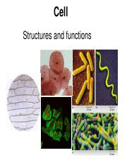 2-cell structure.pdf