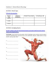 3- Skeletal Muscle SI.docx