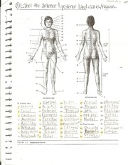 Anterior and Posterior Body Landmarks Study Guide